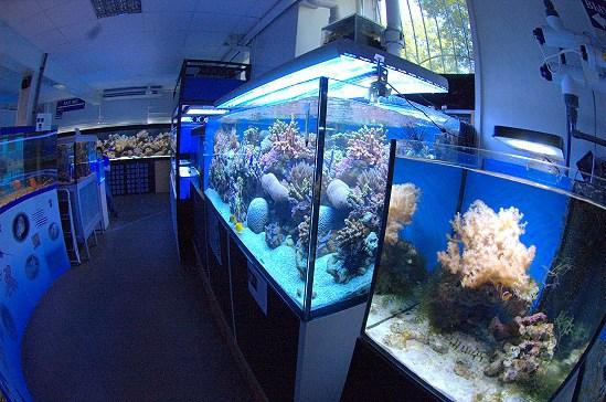 Фотография достопримечательности Морской Аквариум на Чистых Прудах