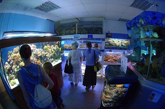 Фотография достопримечательности. Морской Аквариум на Чистых Прудах в Санкт-Петербурге