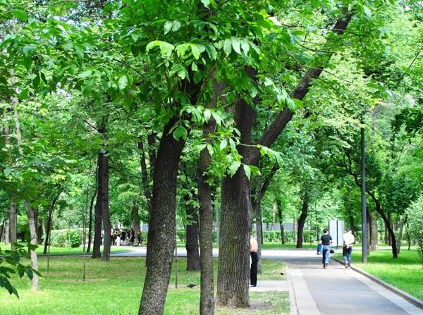 Фотография достопримечательности. Сквер Девичьего Поля в Санкт-Петербурге