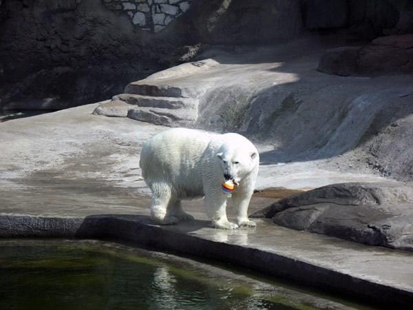 Фотография достопримечательности. Зоопарк в Санкт-Петербурге