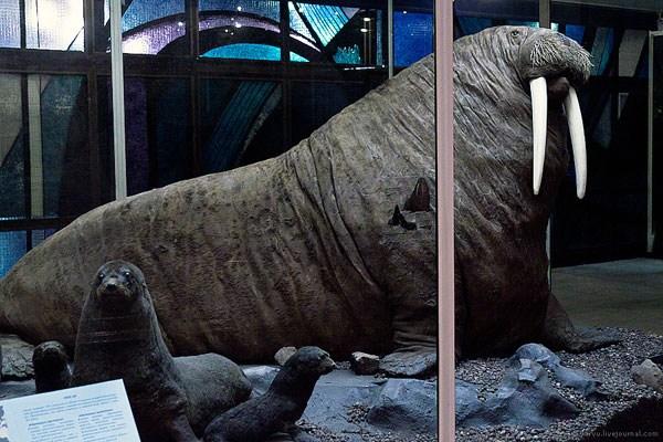 Фотография достопримечательности. Государственный Дарвиновский музей в Санкт-Петербурге