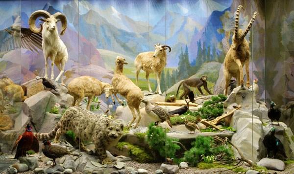 Фотография достопримечательности Государственный Дарвиновский музей
