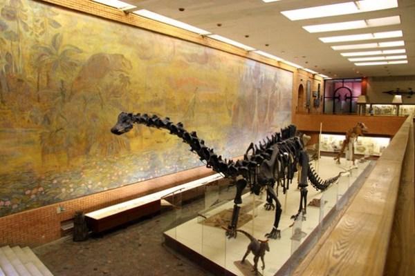 Фотография достопримечательности Палеонтологический музей им. Ю.А.Орлова