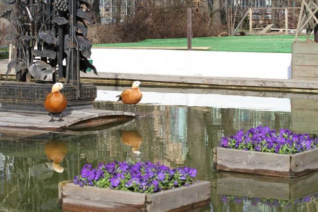 Пруд в Ботаническом саду МГУ, в котором обитают черепахи